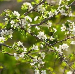 Çiçek - duvar posteri çiçek 124359574