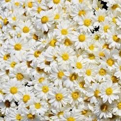 Çiçek - duvar posteri çiçek 159629678