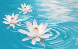 Çiçek - duvar posteri çiçek 4210918