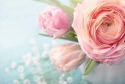 Çiçek - duvar posteri çiçek 96876382