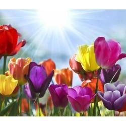 Çiçek - duvar posteri çiçek 25213015