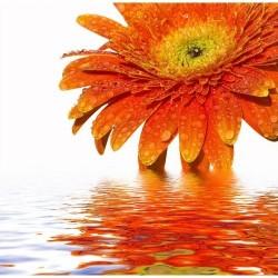 Çiçek - duvar posteri çiçek 29708656