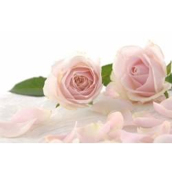 Çiçek - duvar posteri çiçek 39805990