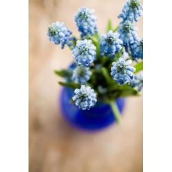Çiçek - duvar posteri çiçek 46753996