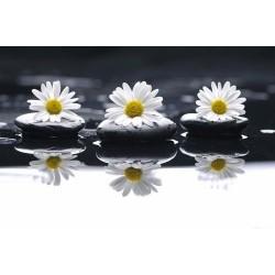 Çiçek - duvar posteri çiçek 54063811