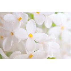 Çiçek - duvar posteri çiçek 57360451