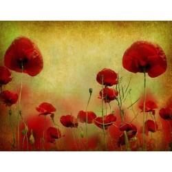 Çiçek - duvar posteri çiçek 69114673