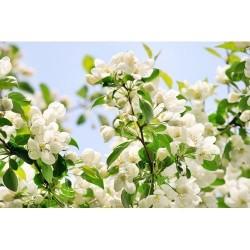 Çiçek - duvar posteri çiçek 72540943
