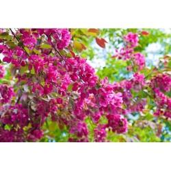 Çiçek - duvar posteri çiçek 72830881
