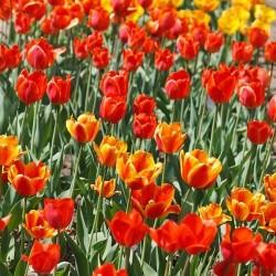 Çiçek - duvar posteri çiçek 88523152