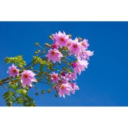 Çiçek - duvar posteri çiçek A103-017