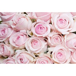 Çiçek - duvar posteri çiçek G 5456