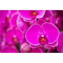 Çiçek - duvar posteri çiçek G 5490