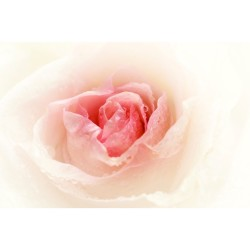 Çiçek - duvar posteri çiçek N-1242