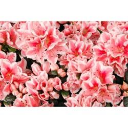 Çiçek - duvar posteri çiçek N276
