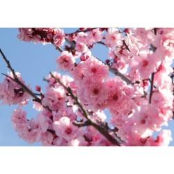 Çiçek - duvar posteri çiçek n296