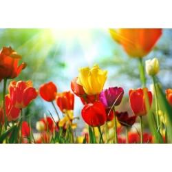 Çiçek - duvar posteri çiçek PR002