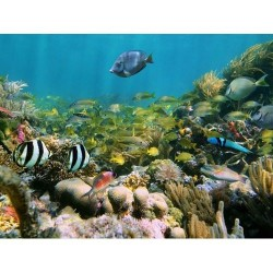 Deniz Altı - duvar posteri denizaltı 101692393