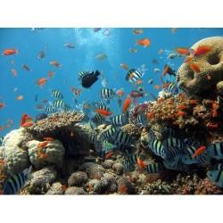 Deniz Altı - duvar posteri denizaltı 2504857