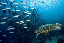 Deniz Altı - duvar posteri denizaltı 3468202