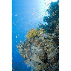 Deniz Altı - duvar posteri denizaltı 54469915