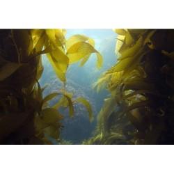 Deniz Altı - duvar posteri denizaltı 60055300