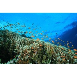Deniz Altı - duvar posteri denizaltı 68056726