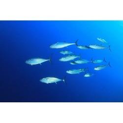 Deniz Altı - duvar posteri denizaltı 76226497