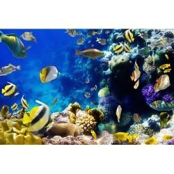 Deniz Altı - duvar posteri denizaltı 83004715
