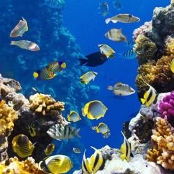 Deniz Altı - duvar posteri denizaltı 83336806