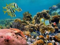 Deniz Altı - duvar posteri denizaltı 88327222