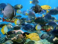 Deniz Altı - duvar posteri denizaltı 98272547
