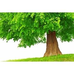 Doğa - duvar posteri doğa 30921862