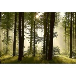 Doğa - duvar posteri doğa G-5190