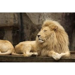 Hayvanlar - duvar posteri hayvanlar 38002249