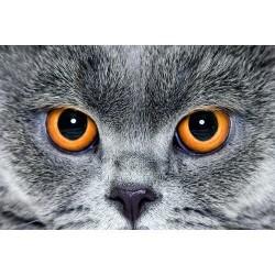 Hayvanlar - duvar posteri hayvanlar 75951820