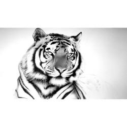 Hayvanlar - duvar posteri hayvanlar N018
