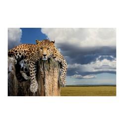 Hayvanlar - duvar posteri hayvanlar N603