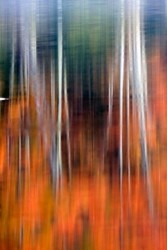 Renk Ahenk - duvar posteri renk ahenk 62756812