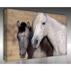 Kanvas Tablo Hayvanlar - Kanvas Tablo 00530