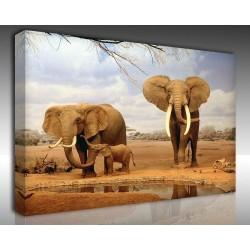 Kanvas Tablo Hayvanlar - Kanvas Tablo 00549