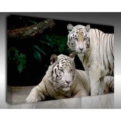 Kanvas Tablo Hayvanlar - Kanvas Tablo 00550
