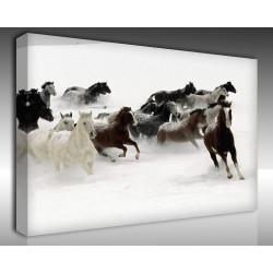 Kanvas Tablo Hayvanlar - Kanvas Tablo 00552