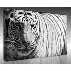 Kanvas Tablo Hayvanlar - Kanvas Tablo 00560